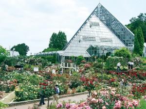 花の文化園-バラ園