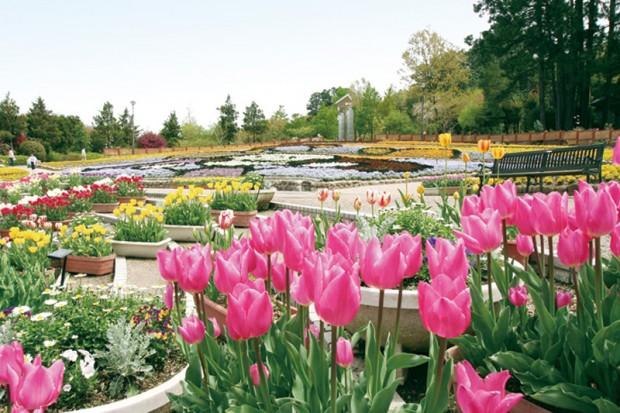 花の文化園-大花壇